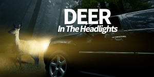 deer in the headlights